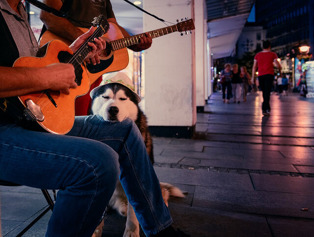Benefits of Music Therapy for Dogs